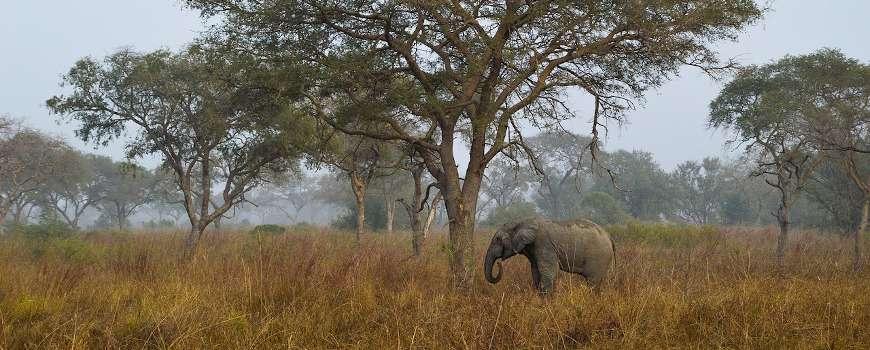 Visto Benin - Elefante nella Savana