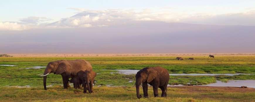 Visto Kenya - Panoramica sul Kilimanjaro