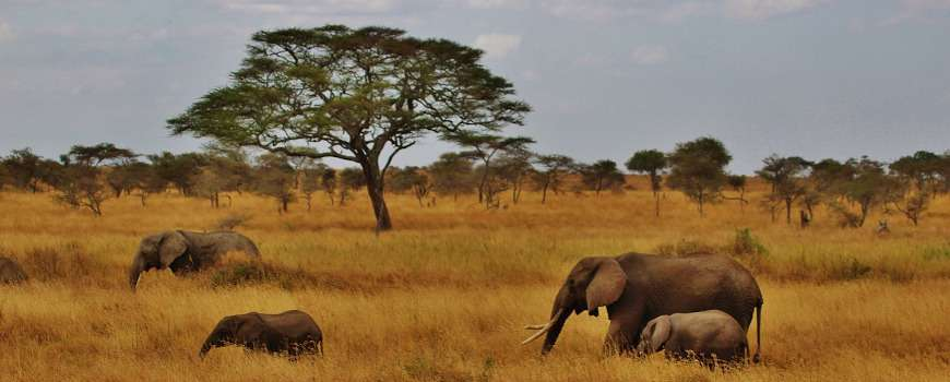 Visto Tanzania - Elefanti nella savana